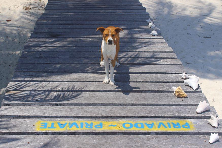 Private guard dog on beach duty