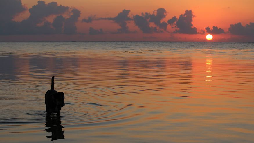 Dog at sunrise in water