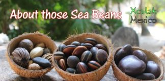 Coconut halves filled with sea beans