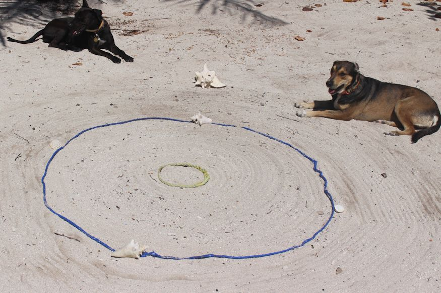 Dogs sitting beside the finished hermit crab racetrack