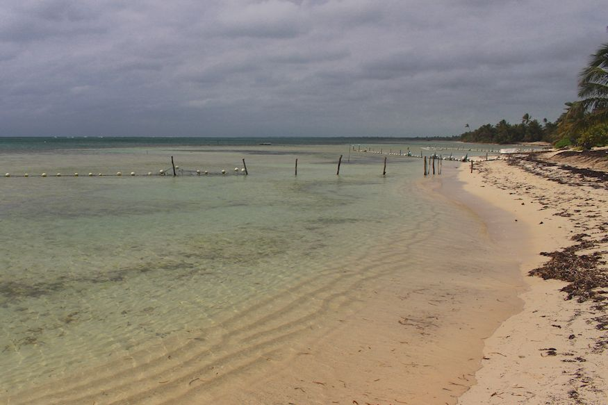 Beach and sargasso net at Acocote