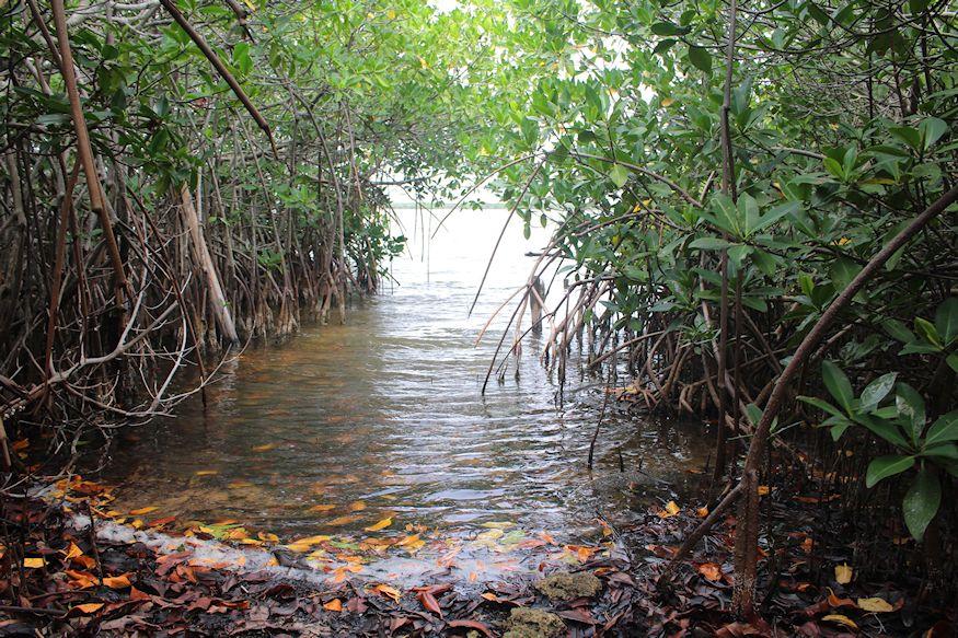 Acocotes Lagoon Access