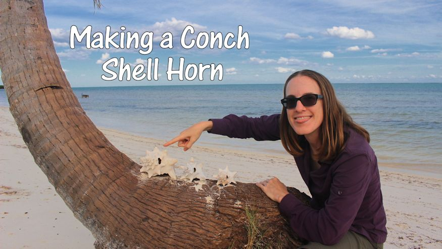 Video - Heather points to a bunch of conch shells because she's going to Make a Conch Shell Horn