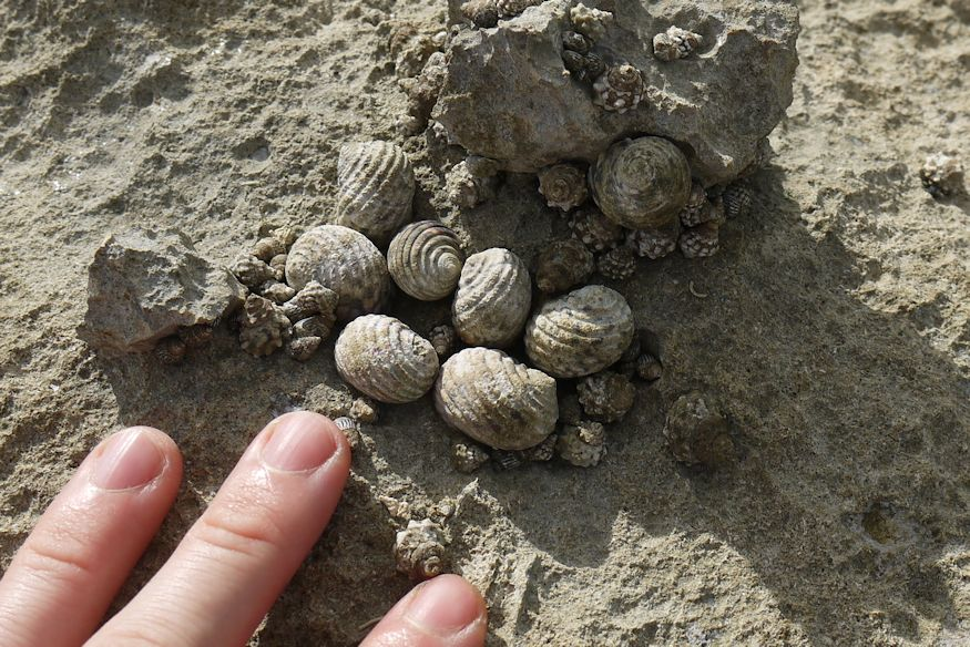 Seashells that aren't conch shells