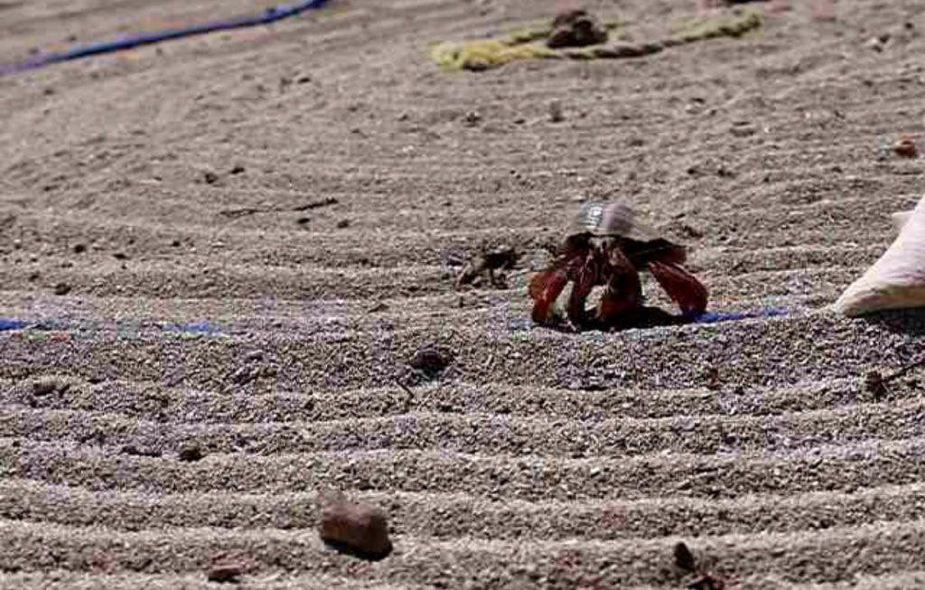 Hermit crabs on the racetrack.