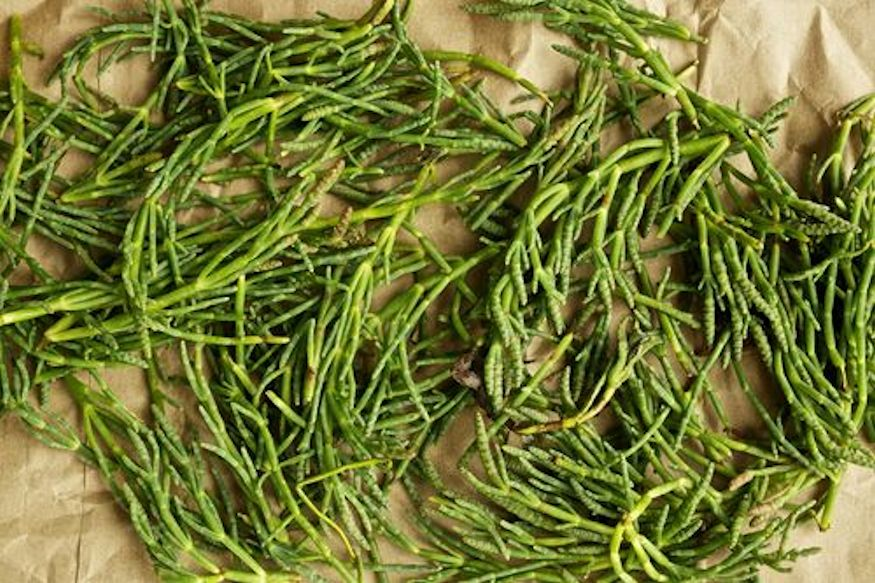 Salicornia, another kind of sea bean