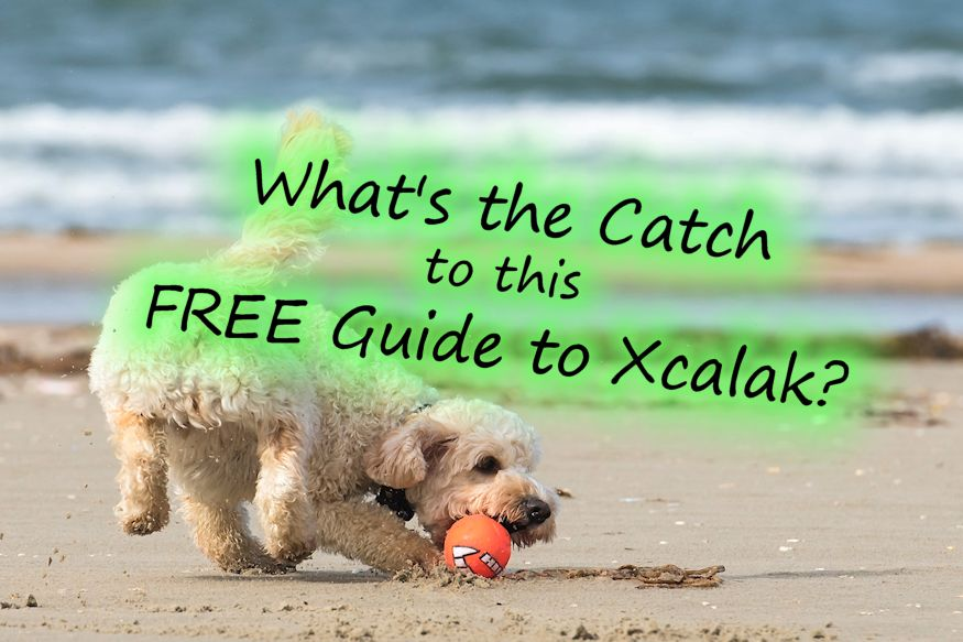 Guide to Xcalak beach dog catching ball
