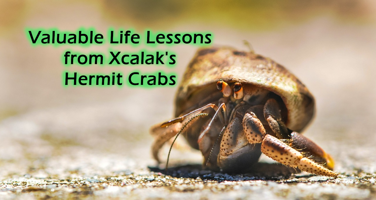 "Up-close, ground-level photo of a hermit crab, with the title ""Valuable Life Lessons from Xcalak's Hermit Crabs"""