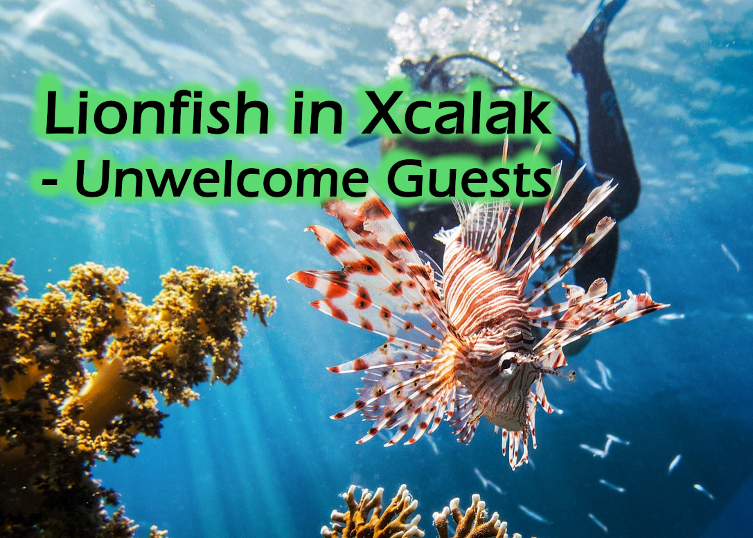 A diver swims close (but doesn't touch!) a lionfish - Lionfish in Xcalak featured image