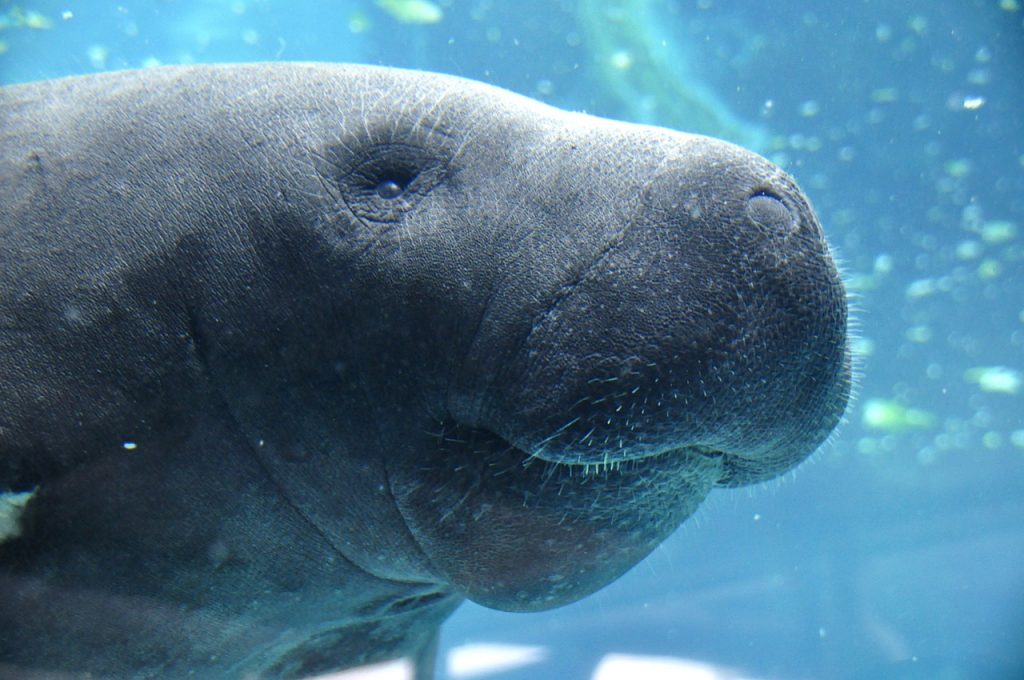 Hi! I'm a friendly manatee and I love Xcalak!